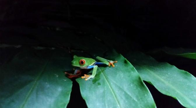 Costa Rica für Tierliebhaber