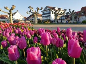 Frühling in Langenargen
