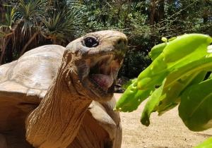 Fütterung der Riesenschildkröten