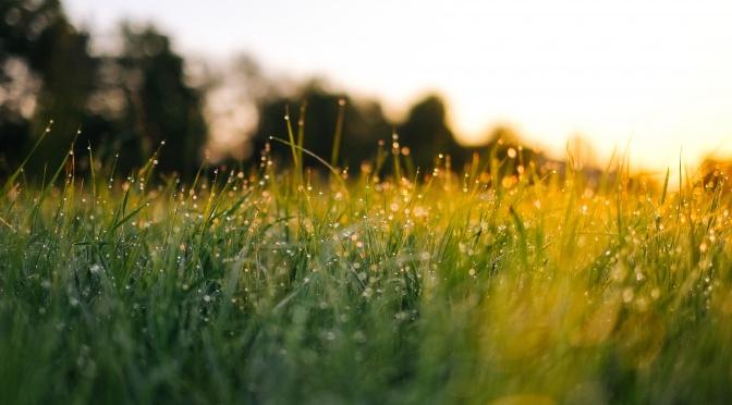 Miracle Morning: Wie man sich motiviert früh aufzustehen